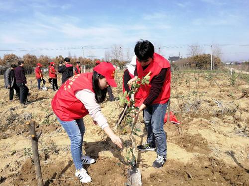 """肥西县花岗镇青年志愿者植树节给春天""""一点颜色看看"""""""